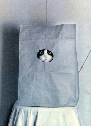 Cat in paper bag