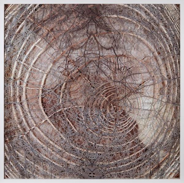 Caroline Jane Harris' natural patterns